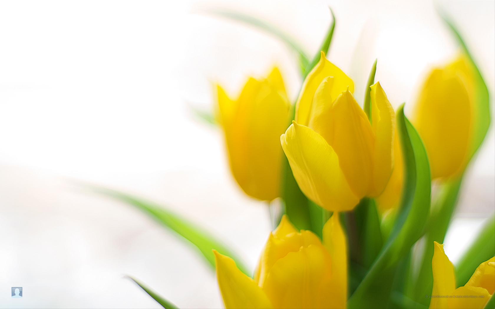 Spring flowers 51 burton tv news burton tv news spring flowers 51 mightylinksfo