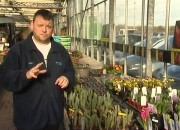 "Watch ""Swarkestone Nursery's 'Green Finger Tips' Feb 2015 edition"" on YouTube"