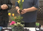 "Watch ""Swarkestone Nursery March 2015 Edition of Green Finger Tips"" on YouTube"